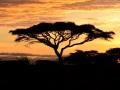 SerengetiNdutu_36