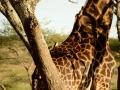 SerengetiNdutu_159