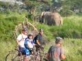 1255 Gunnar, Tony, Carmel and Ake with Bull Elephant West Kili