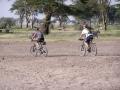 1248 Zebra still curious at West Kili
