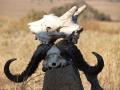 Tansania Abenteuerreisen