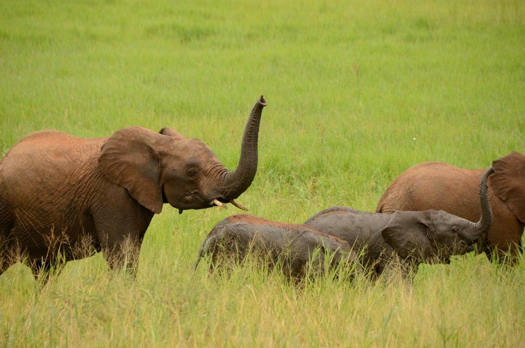 Tansania Safari