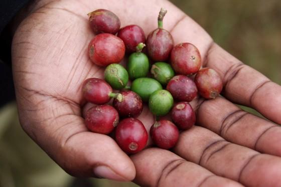 Kaffee Tour Moshi Materuni Kilimandscharo